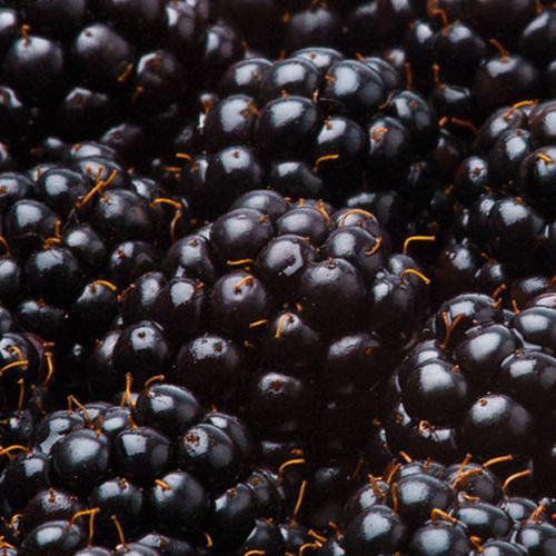 Blackberries HoReCa ТМ «Rud»