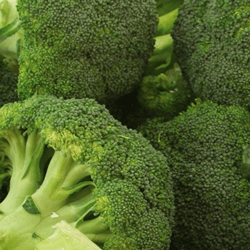 Broccoli HoReCa