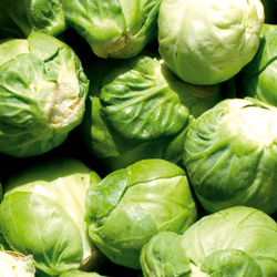 Brussles Sprouts HoReCa