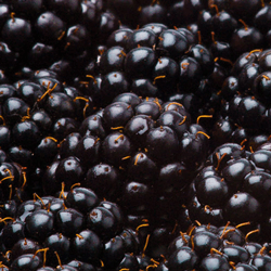 Blackberries HoReCa