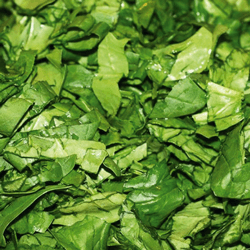 Cut Spinach HoReCa