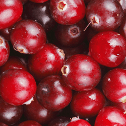 Cranberries HoReCa